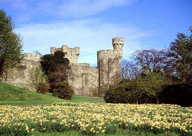 Happy St. David's Day....it's daffodil season in Wales