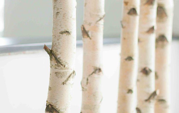 Weiße Birkenstämme kaufen - unsere Birken kommen aus Bayern, sind getrocknet und käferfrei. Wir versenden international und große Mengen