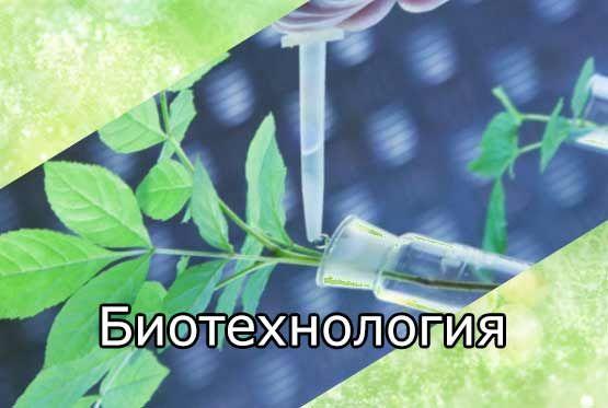 Биотехнология (основы, направления, методы)