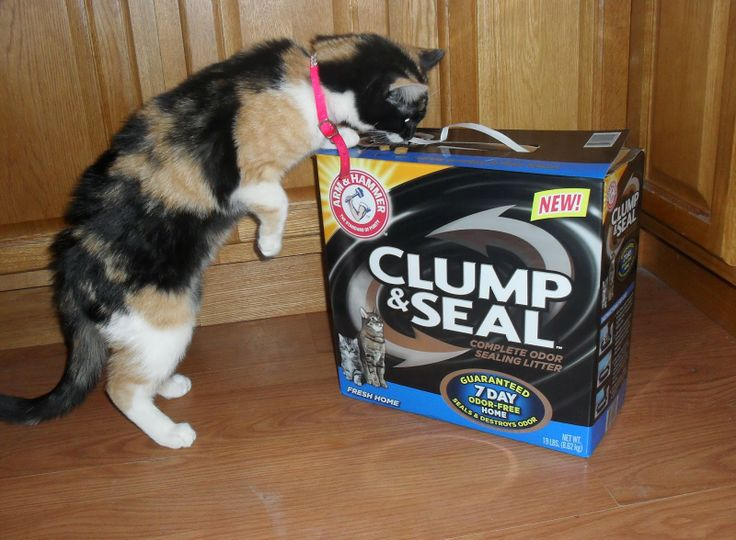 NEW ARM & HAMMER CLUMP & SEAL Cat Litter review