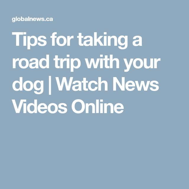 Tips for taking a road trip with your dog | Watch News Videos Online