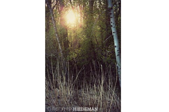 Sun Through Trees  Digital Photography Wall by LanternLaneGifts, $5.00  https://www.etsy.com/listing/195818392/sun-through-trees-digital-photography?ref=listing-5  #Photography #Download #Photos  #woods  #rustic  #Wall Decor  #Art  #Artwork  #Home Decor  #Decoration   #nature  #trees #sun  #outdoors  #light #birch trees  #grass  #evening