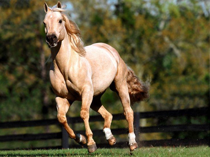 Quarter Atları