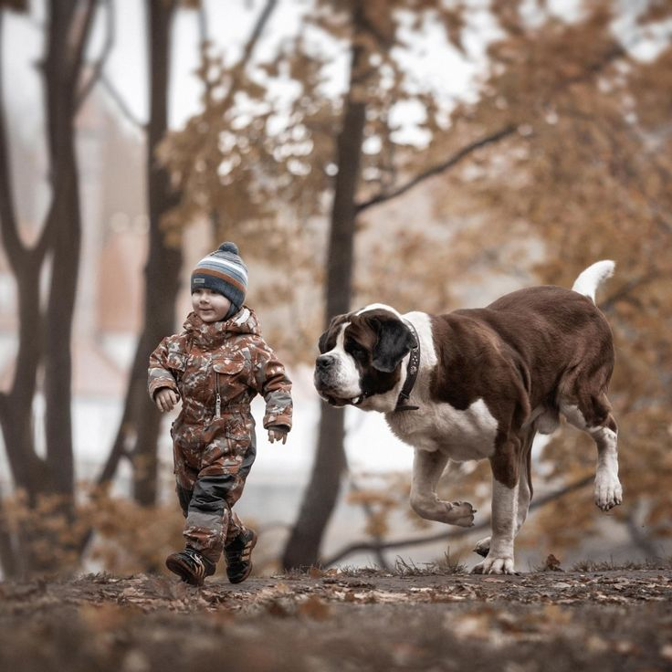 He also tries to ensure that the photos are taken where the dogs commonly walk and play with children in familiar surroundings so they are as natural as possible. | You'll Never See Anything As Adorable As These Little Kids With Big Dogs