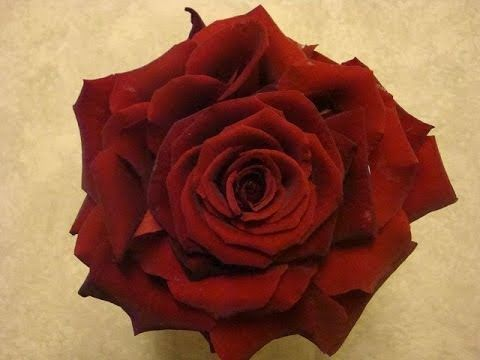 Der Tag der Liebe rückt näher! Nutze diesen romantischen Anlass des Jahres, um dein Herzblatt eine Freude zu bereiten.