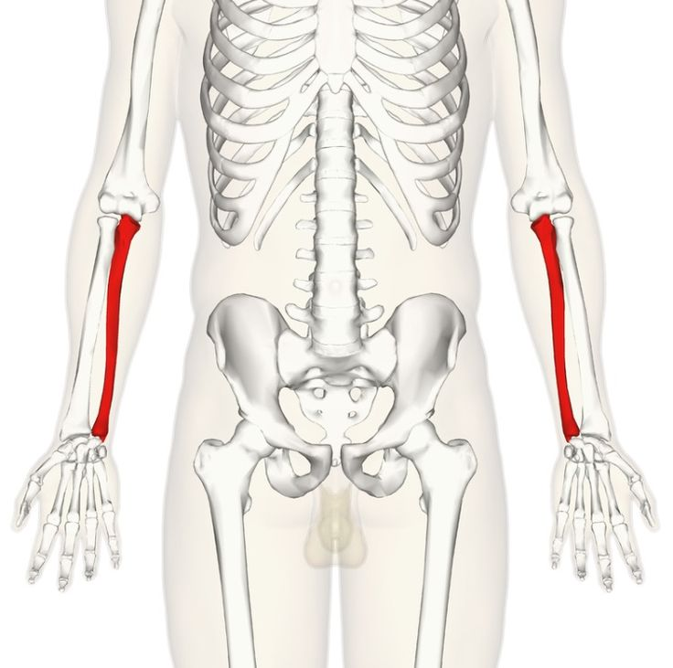 15 best Chapter 8: The Skeletal System images on Pinterest | Anatomy ...