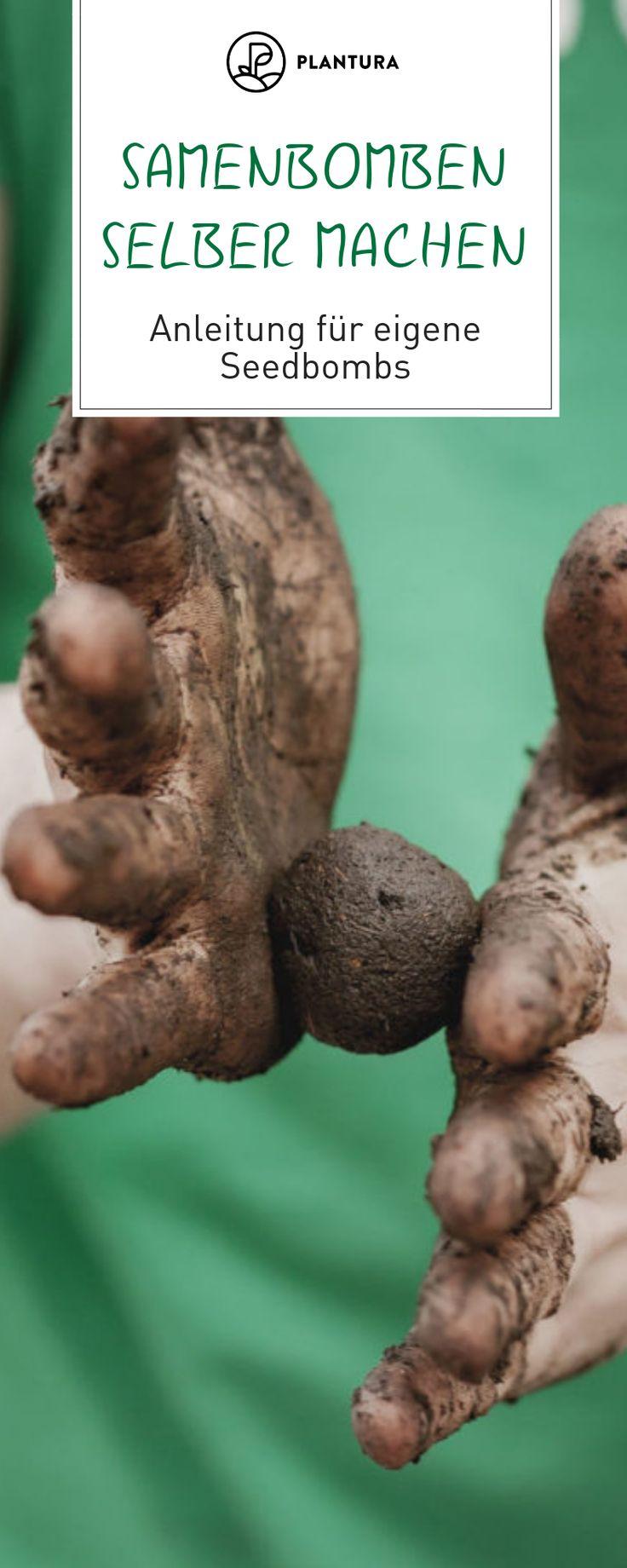 Samenbomben selber machen: Anleitung für eigene Seedbombs