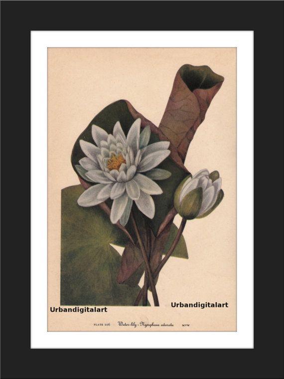 Water Lily-Downloadable Vintage  Art Print by UrbanDigitalArt