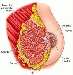 Definition of gland in the Medical Dictionary by The Free Dictionary