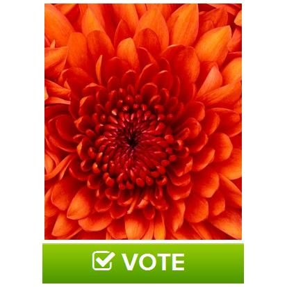 Image poll