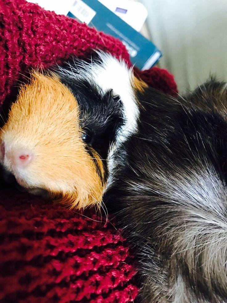 Baby pics pigs of