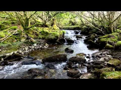 Relax 8 Hours of Birds Singing and Water Sounds-Nature Sound Relaxation-Relaxing Birdsong - YouTube