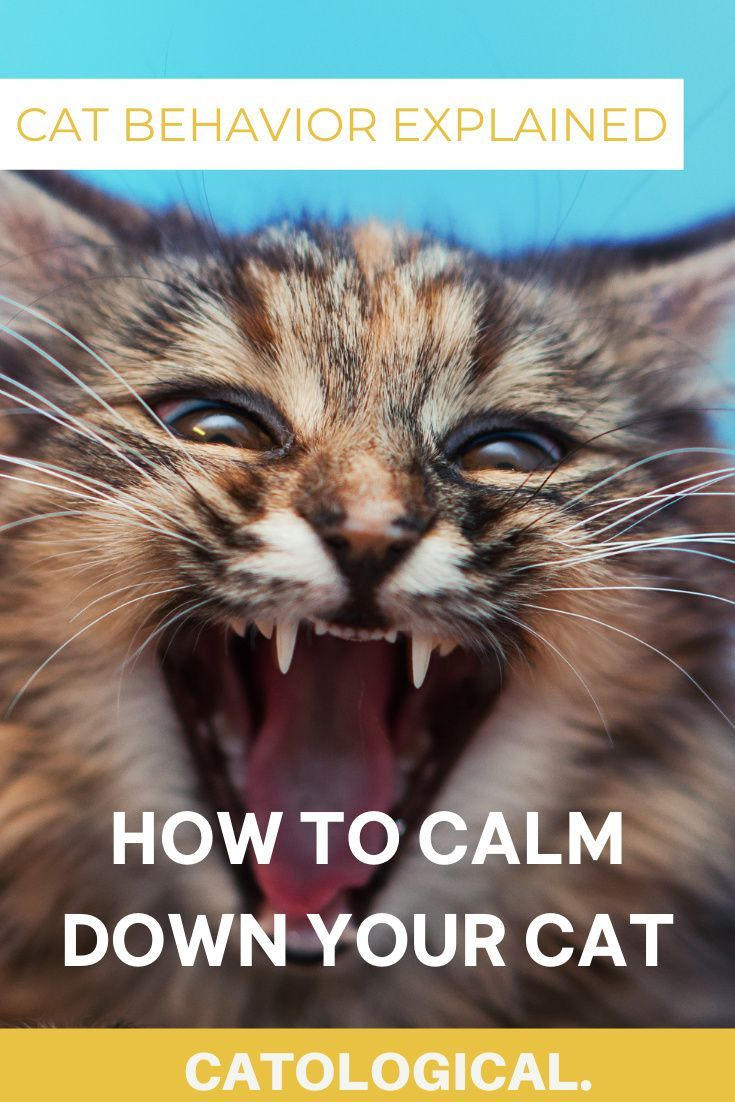 How To Calm Down Your Cat When It S Angry Scared Or Agitated In 2020 Cat Behavior Cat Parenting Cat Behavior Problems