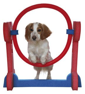 Agility hoppring, inomhus, för små hundar