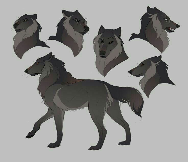 wolf front poses - 736×634