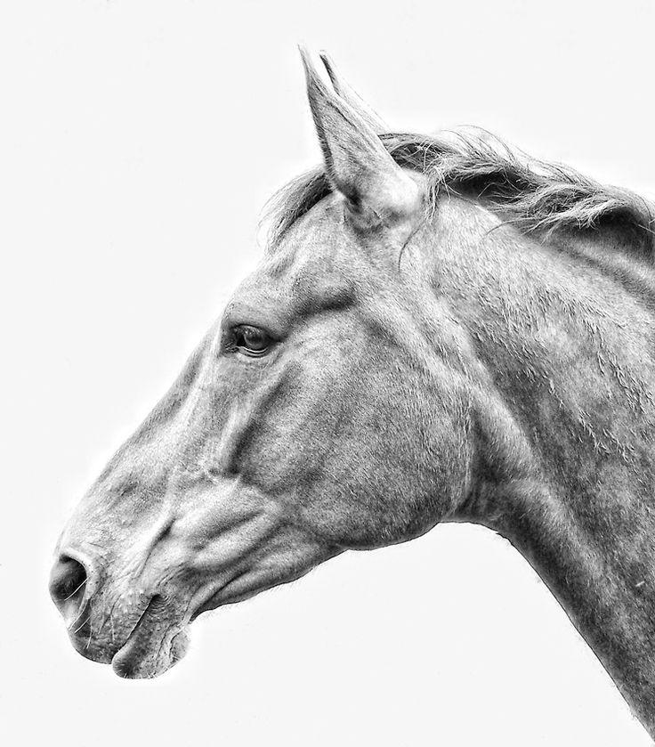 Картинка головы лошадки