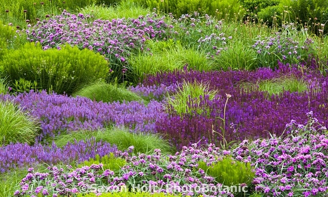 166 best images about piet oudolf the master on for Lurie garden planting plan
