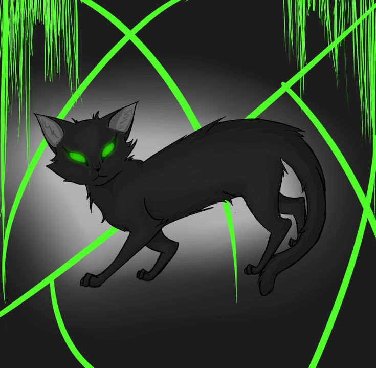 Warriors Dawn Of The Clans Characters: 63 Best Images About Hollyleaf!!!!! On Pinterest