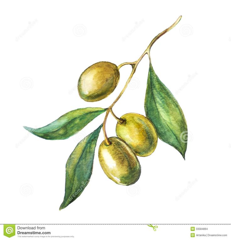 Hand Drawn Olive Branch Stock Photos – 152 Hand Drawn Olive Branch ...