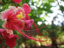 Resultado de imagem para fleurs tropicales