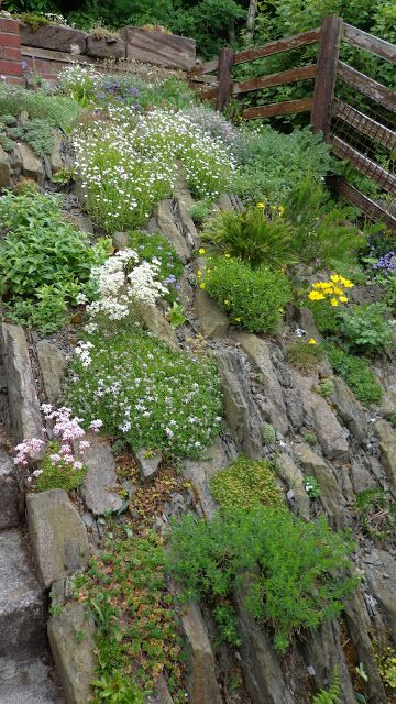 38 Best Crevice Gardens Images On Pinterest