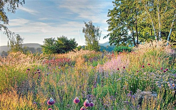 386 best images about sun perennial beds on pinterest for Landscapes in landscapes piet oudolf