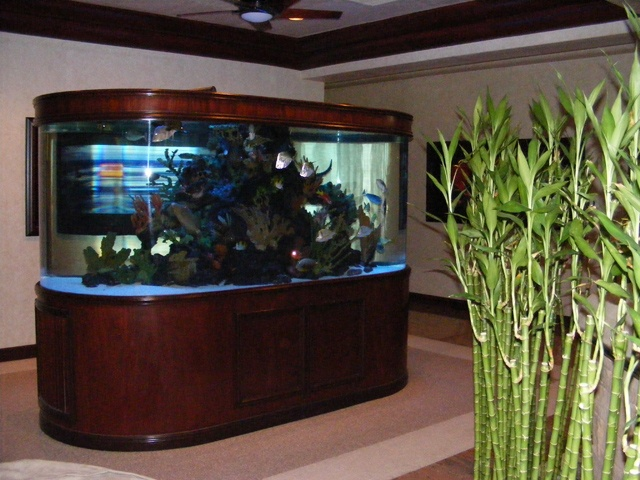 66 best images about fish tanks made by atm on pinterest for Atm fish tank