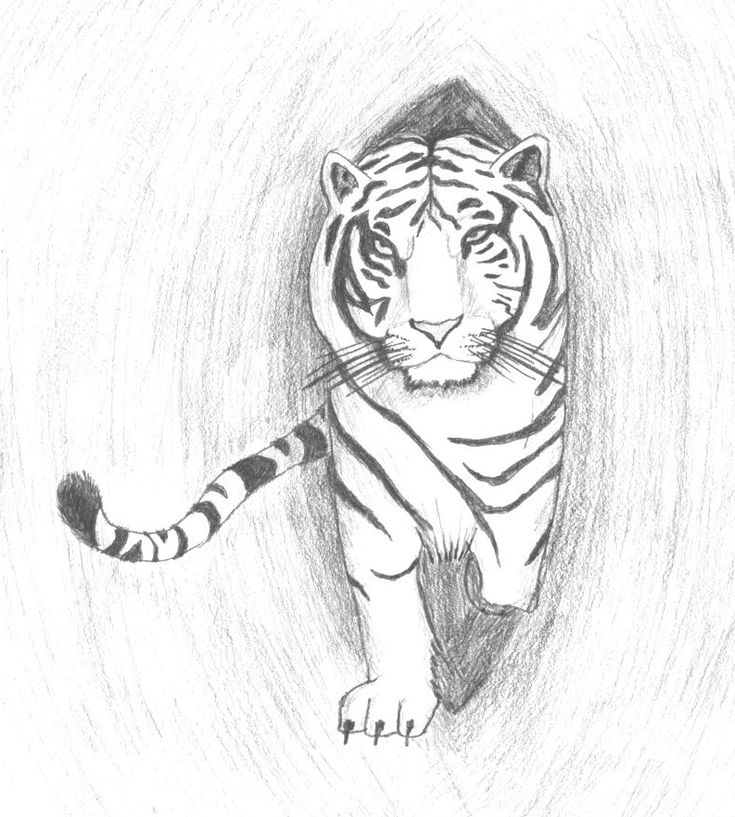 Картинки от тигра для рисования