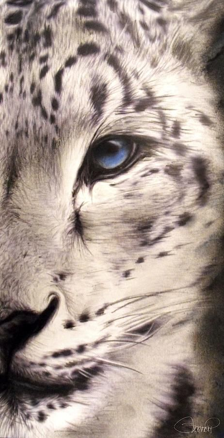Snow Leopard by Sheena Pike
