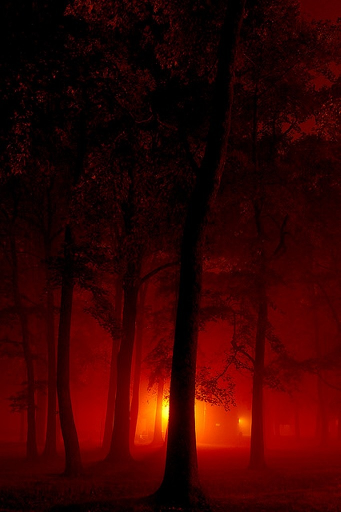 Forest Fire. by BamaWester