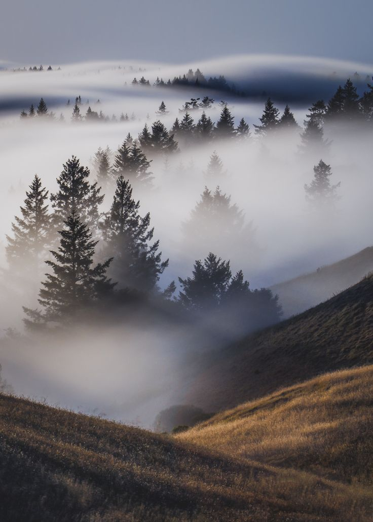 """el-mo-fo-to: """" f o g a h o l   marin county, california by Lorenzo Montezemolo """""""
