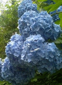 Most Popular Shrubs   The Most Popular Flowering Shrubs and Bushes