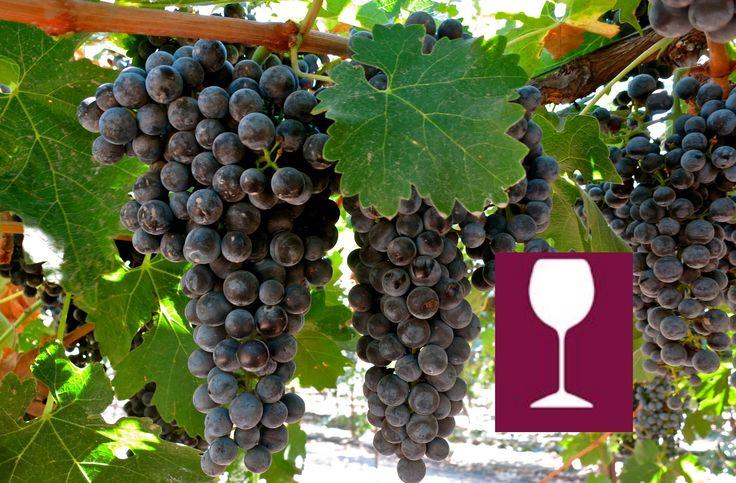 What is Cabernet Sauvignon?