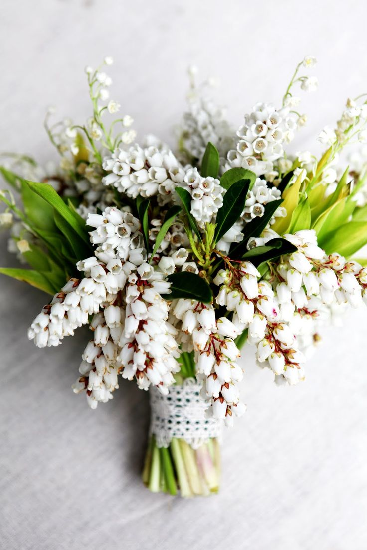 17 Best Images About Andromeda Bouquet