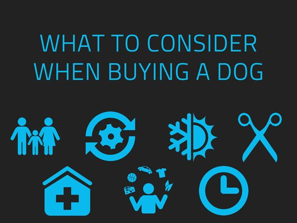 Maybe you've wanted a dog since you were a little kid. Or maybe you've recently discovered how much you would love to have a canine companion. But before you rush over to the computer and start searching, remember that a dog is not just for Christmas, but for life! Here are just a few things you should consider when buying a dog.