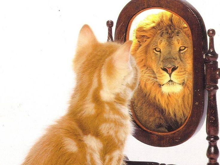 Il y a certaines personnes qui semblent avoir une forte estime d'elles-mêmes, mais au fond elles sont seulement très égocentriques et n'ont qu'une faible estime d'elles-mêmes.