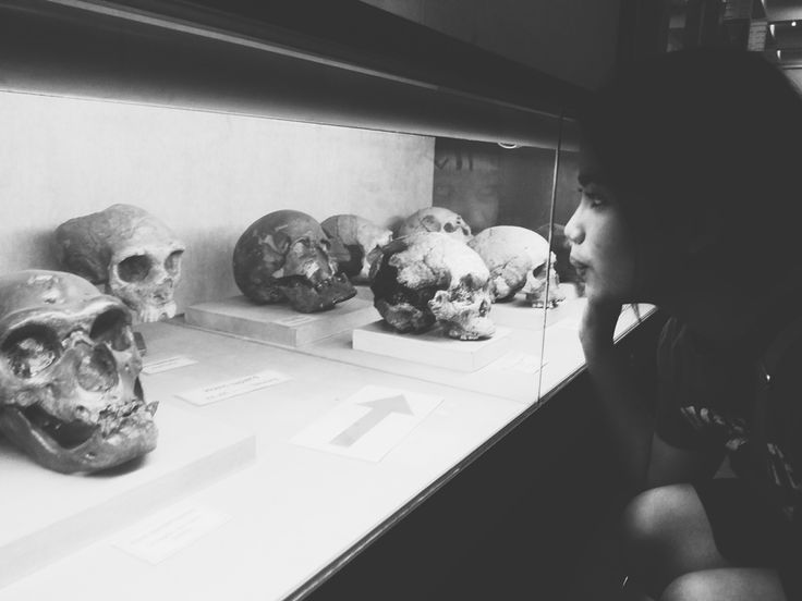 Skull at Geological Museum