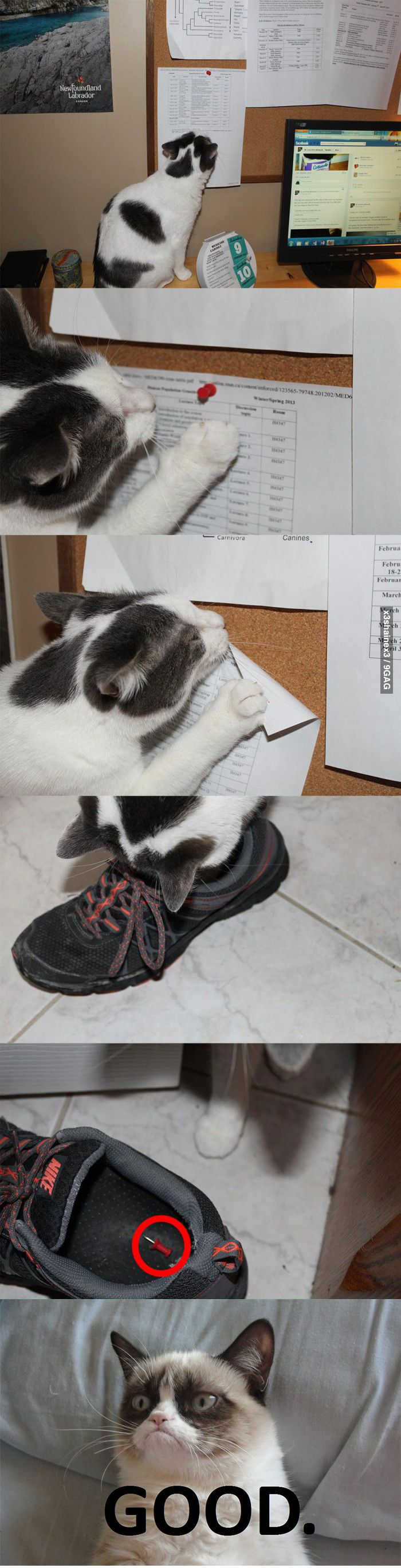 cats . only repinning is because i have the same nike's lol and i am sure rasc would do this
