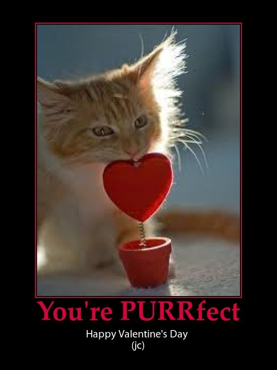 valentine day cat puns