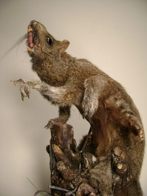 1000 Images About Taxidermy On Pinterest Peter Wright