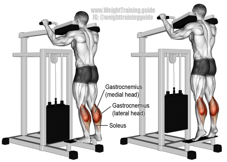 "Machine standing calf raise. An isolation exercise. Target muscle: Gastrocnemius. Synergists: Soleus. The gastrocnemius and soleus make up your calf. Visit site and read the ""Comments and tips"" to learn how to emphasize each head of the gastrocnemius."