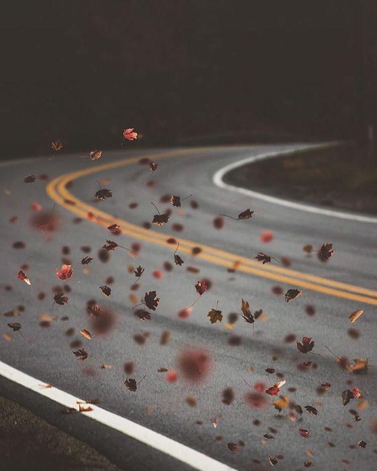 Beautiful Autumn Trees Photography by Arnaud Montagard