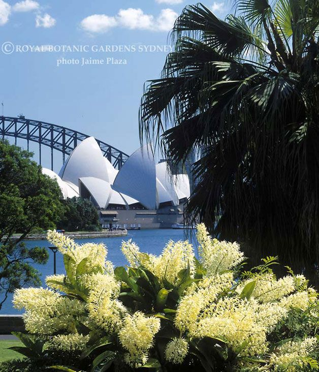 Royal Botanical Gardens, Sydney. A perfect spot to relax, soak up the sun, have a picnic, watch fruit bats and admire the amazing Sydney views.