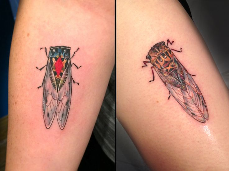 119 best tattoo ideas images on pinterest cicada tattoo bug tattoo and insect tattoo. Black Bedroom Furniture Sets. Home Design Ideas