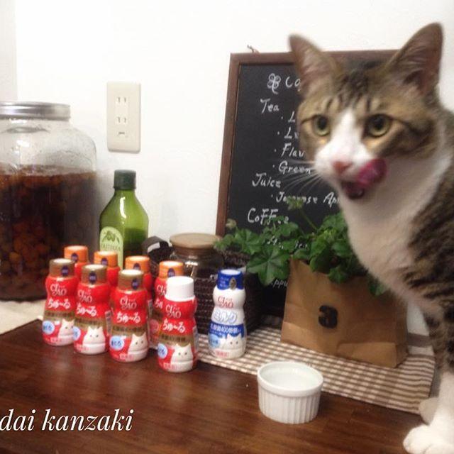 みんなが大好きなちゅ〜る。ボトルタイプのちゅ〜るをネットで発見‼︎嬉しくてまとめ買い🤗でも僕の思ってたもの違うみたい😞けど孝太郎は満足気😊毎日、少しずつ食べようね☺️ #にゃんこ #ニャンコ #おやつ #まとめ買い #ペロリ #満足 #おいしかった #猫 #ネコ #ねこ #元保護猫 #動物愛護 #全ての猫が幸せに暮らせる世のニャかを #ツンデレ #猫との暮らし #ねこ部  #ねこ好き #ねこ好きさんと繋がりたい #猫好きさんと繋がりたい #キジトラ #キジ猫 #あいねこ #愛猫 #愛猫同好会 #にゃんすたぐらむ #ニャンスタグラム #みんねこ #catstagram #catsofinstagram #build_up_future