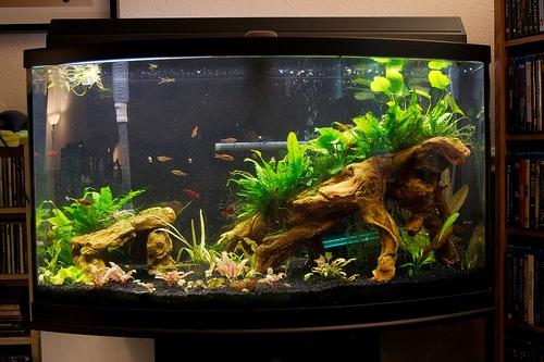 5 gallon fish tank 50 tetra aquarium cube tank 1 5 gallons 2017 fish tank. Black Bedroom Furniture Sets. Home Design Ideas