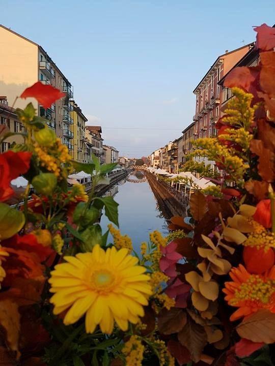 Buongiorno #Milano Colori autunnali... Foto di Maria Grazia Ricchiuti #milanodavedere Milano da Vedere