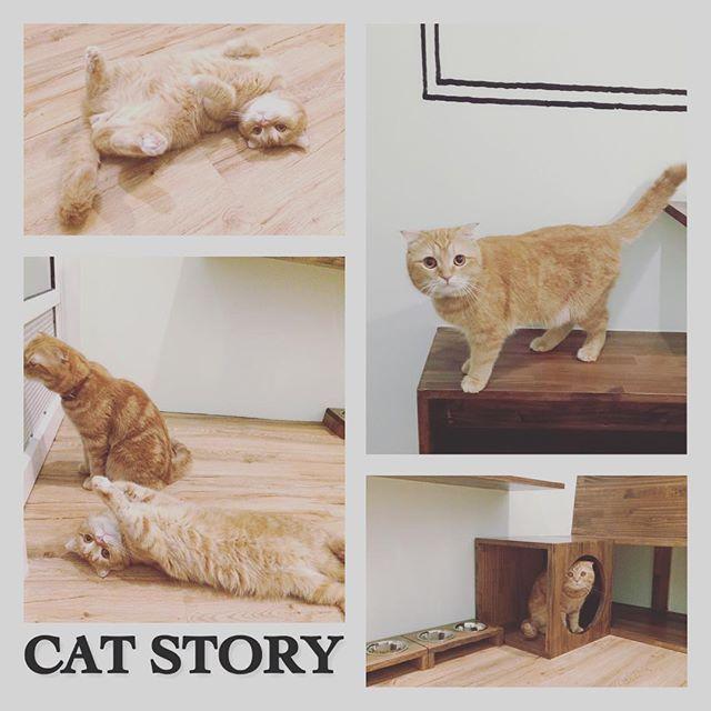 Instagram Photo By Cat Story Apr 13 2016 At 6 51am Utc