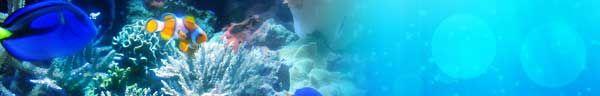 A Beginner's Guide to Aquascaping | Aquaec Tropical Fish