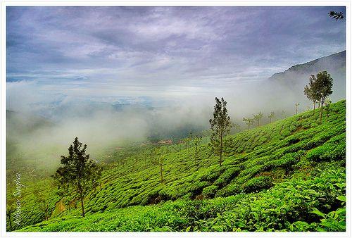 Tea-Scape II | Flickr: Intercambio de fotos